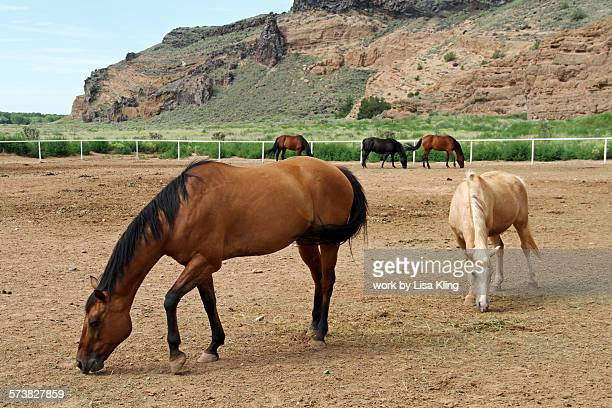 Rescue horses in New Mexico