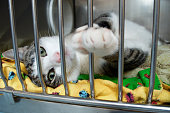 A grey and white kitten reaches a paw out of its cage at the animal shelter
