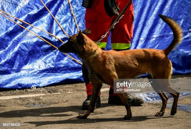 A rescuer takes a break with his sniffer dog during work at a flattened building in Mexico City on September 25 almost a week after a magnitude 71...