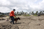 A rescuer uses K9 dog in searching for missing people on December 14 2012 in the devastated town of New Bataan Compostela Valley province Philippines...