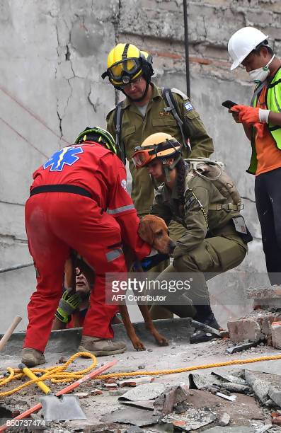 Rescuers from Israel join a search for survivors with a sniffer dog in a flattened building in Mexico City on September 21 2017 two days after a...