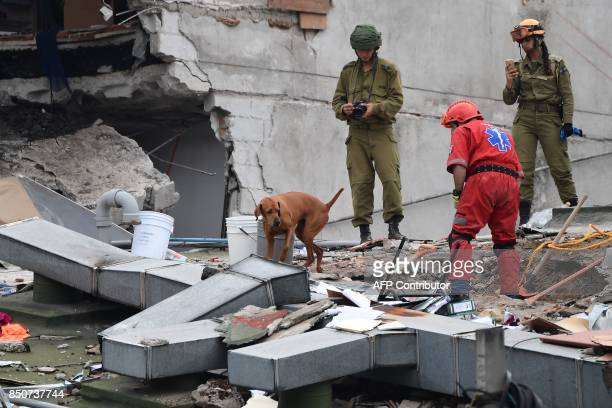Rescuers from Israel register the moves of a sniffer dog as they join the search for survivors in a flattened building in Mexico City on September 21...