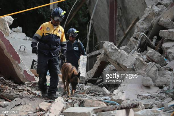 Rescuers look for victims with the help of a dog amid the ruins of a building knocked down by a magnitude 71 earthquake that jolted central Mexico...