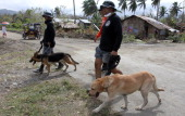 Rescuers use K9 dogs in a search for missing people on December 14 2012 in the devastated town of New Bataan Compostela Valley province Philippines...