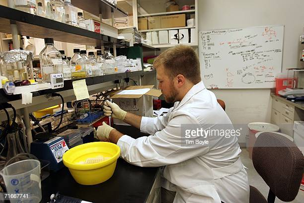 Research assistant and graduate student Jackson Hoffman works on genes that regulate/control stem cell properties/characteristics in the biochemistry...