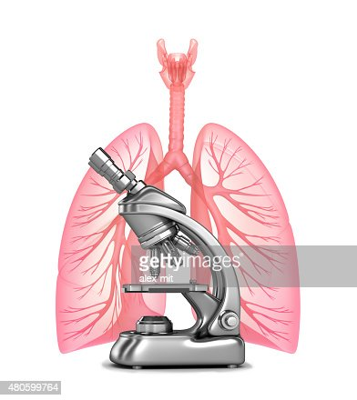 Research of human lungs and bronchi : Stock Photo