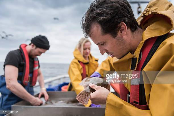 Research scientists measuring fish on research ship