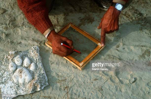 Researcher Tracing Tiger Tracks in India