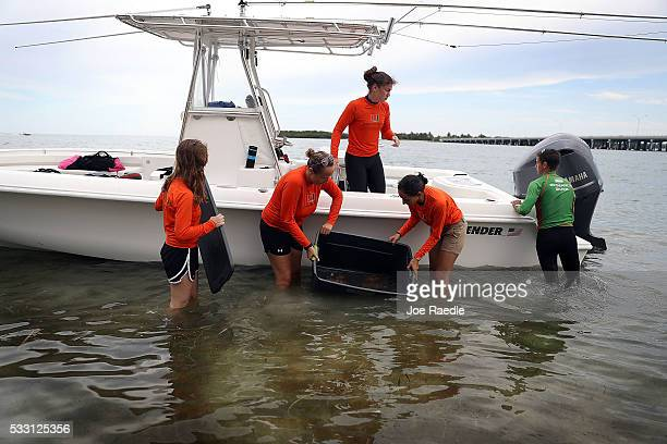 Researchers from the University of Miami Rosenstiel School of Marine and Atmospheric Science off load containers with pieces of Orbicella Faveolata...