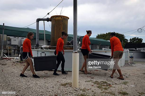 Researchers from the University of Miami Rosenstiel School of Marine and Atmospheric Science carry containers with pieces of Orbicella Faveolata...