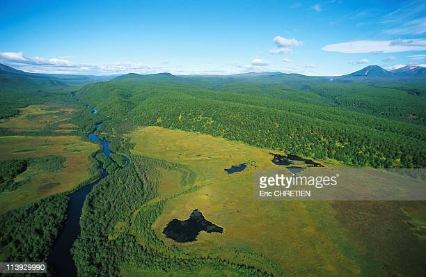 Reserve Of Kronotski Kamtchatka In Russia In 1999The bear's habitat in Kzamtchatka tundra taiga and mountains