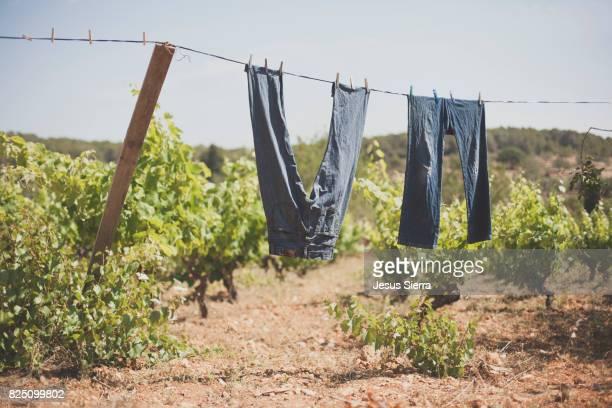 resh laundry in Ibiza.