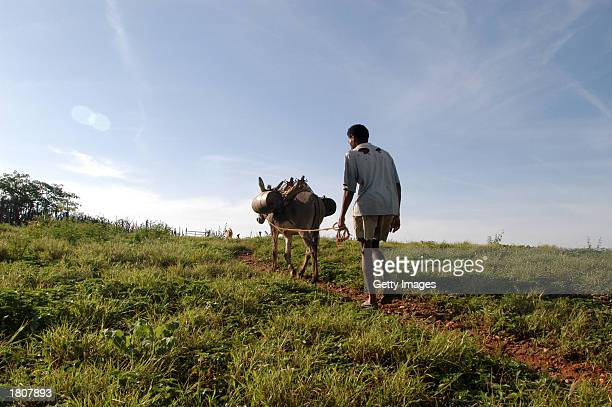 A resident of Acaua takes water home on a farm animal February 15 2003 in Acaua Brazil Less than five percent of Acaua residents have running water...