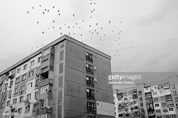 residential buildings and a flock of birds
