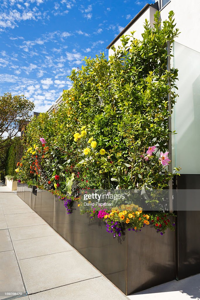 Residential oversized flower box. : Stock Photo