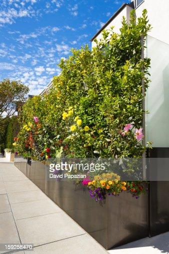 Residential oversized flower box. : Stock Photo