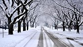 Empty street and rows of trees forming tunnel in winter scenery.