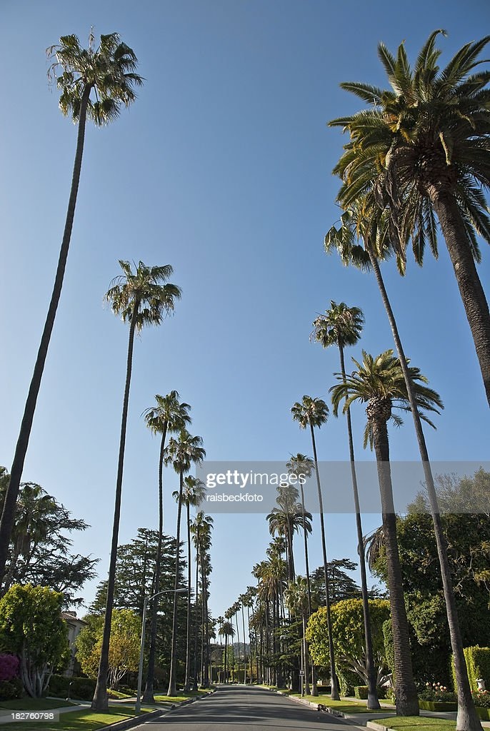 Residential Street in Beverly Hills, California