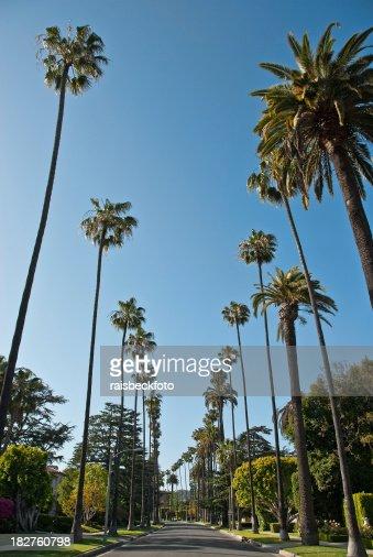 Residential Street in Beverly Hills, California