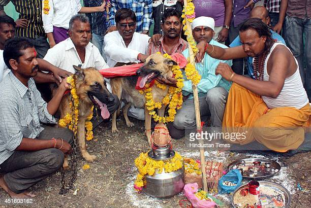 Residents of Musakhedi perform marriage of dogs to appease rain Gods on July 2 2014 in Indore India Sufferings from lack of rain residents have...