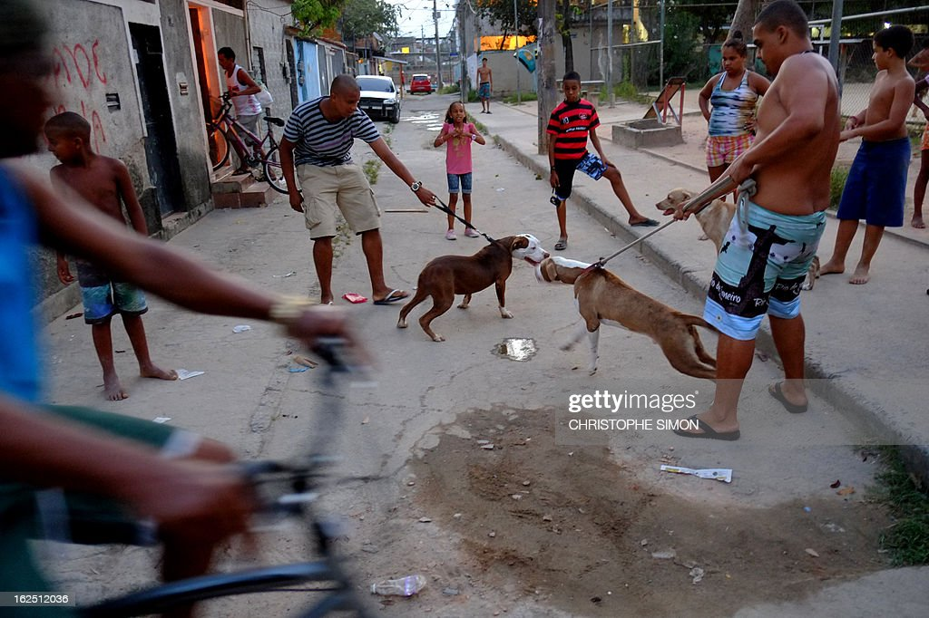 Residents of Rio de Janeiro's Cidade de Deus shantytown gather with their pit bull dogs, on February 23, 2013. AFP PHOTO/Christophe Simon