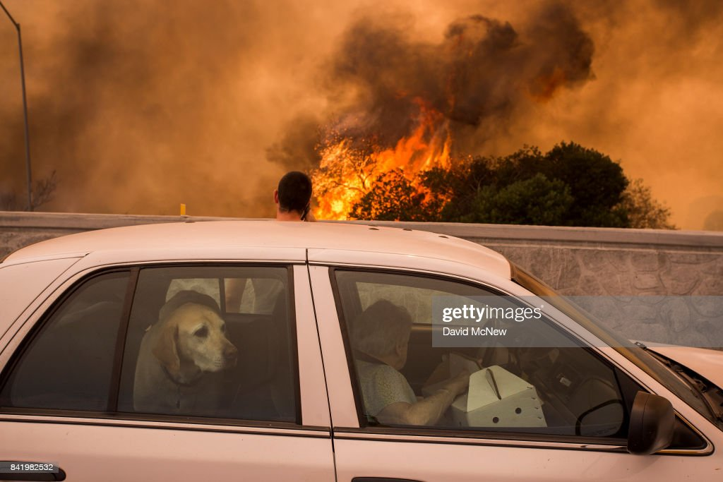 Residents on the 210 freeway try to see if their house and two of their cats on the other side of thick smoke and flames might burn near the community of Tujunga during the La Tuna Fire on September 2, 2017 near Burbank, California. Los Angeles Mayor Eric Garcetti said at a news conference that officials believe the fire, which is at 5,000 acres and growing, is the largest fire ever in L.A. People have been evacuated from hundreds of homes in Sun Valley, Burbank and Glendale. About 100 Los Angles firefighters are expected to return soon from Texas, where they've been helping survivors from Hurricane Harvey.
