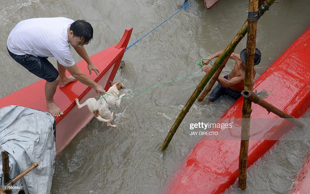 Residents rescue a dog carried away by floodwaters in the farming town of Novaleta, some 26 kilometres outside Manila on August 19, 2013. Torrential rain paralysed large parts of the Philippine capital on August 19 as neck-deep water swept through homes, while floods in northern farming areas claimed at least one life. AFP PHOTO / Jay DIRECTO