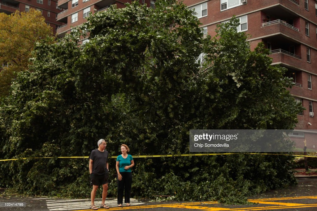 Residents survey one of five large trees that were knocked down by Hurricane Irene's high winds in front of the East River Cooperative Village apartment buildings along Grand Street August 28, 2011 in New York City. The hurricane hit New York as a Category 1 storm before being downgraded to a tropical storm.