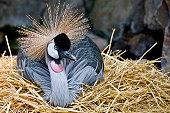 Respite Bird