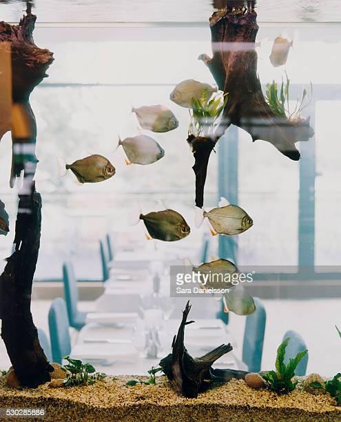 Restaurant Seen through an Aquarium