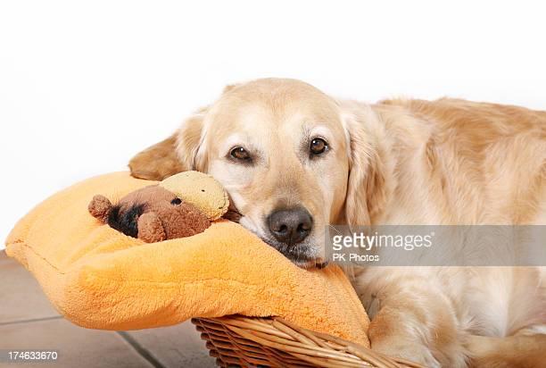 Ruhen Hund