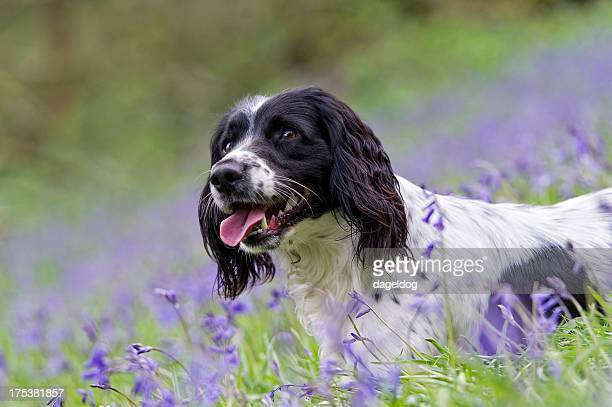 resting in the bluebells