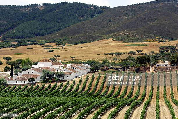 Restored medieval Sao Gregorio village nestles in the parched rolling hills and vineyards near the village of Borba in Alentejo 180 kilometers east...
