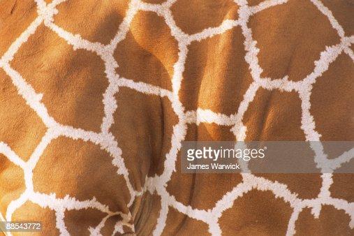 Reticulated giraffe pattern  : Stock Photo