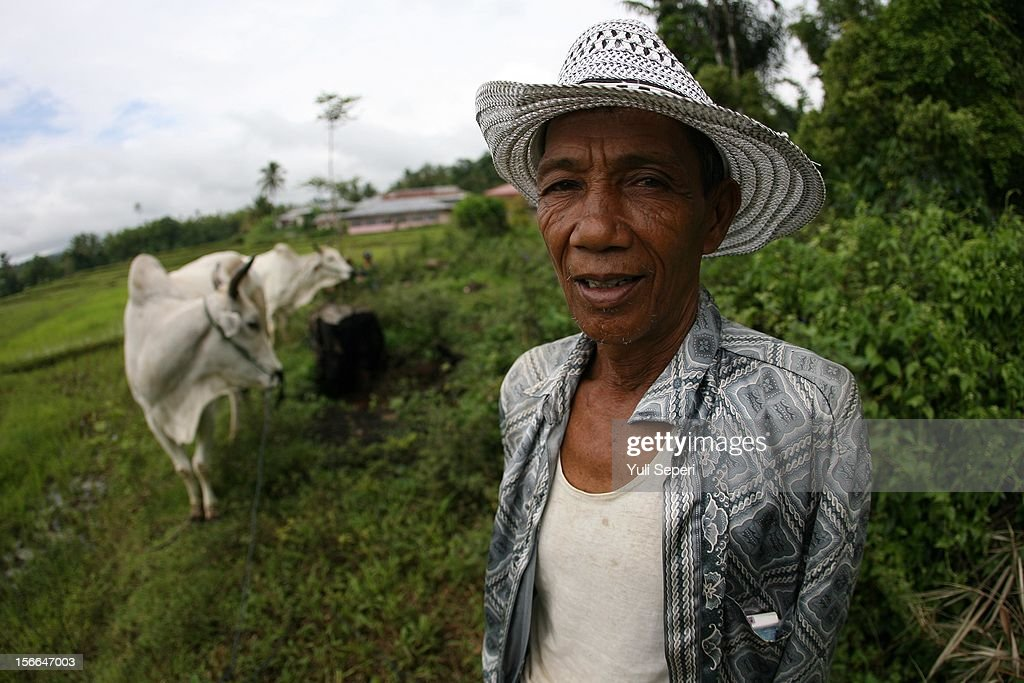 Retired jockey Zainal attends a ''Pacu Jawi,'' a cow race, on November 17, 2012 in Batusangkar, Indonesia. The ''Pacu Jawi'' is held annually in muddy rice fields to celebrate the end of the harvest season. Jockeys grab the tails of the bulls and skate across the mud barefoot balancing on a wooden plank to show the strength of their bulls who are later auctioned to buyers.