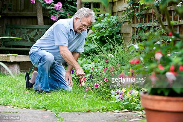 retirement: active senior tending to his garden