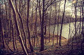 Romantic picture of a spot in a forest next to a lakeshore. Trees at the left half of the image open to show a lake under a sweet light. The atmosphere is natural and magical at the same time.