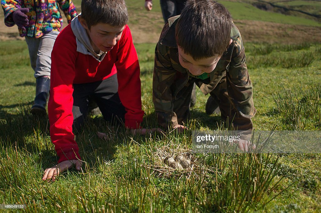 Reuben Owen (L), 10, and his brother Miles, 7 examine but don't touch a birds nest found on the moors at Ravenseat, the farm of the Yorkshire Shepherdess Amanda Owen on April 15, 2014 near Kirkby Stephen, England. Amanda Owen runs a 2,000 acre working hill farm in Swaledale which is one of the remotest areas on the North Yorkshire Moors. Working to the rhythm of the seasons the farm has over 900 Swaledale sheep that are now entering the lambing season as well as cattle and horses.