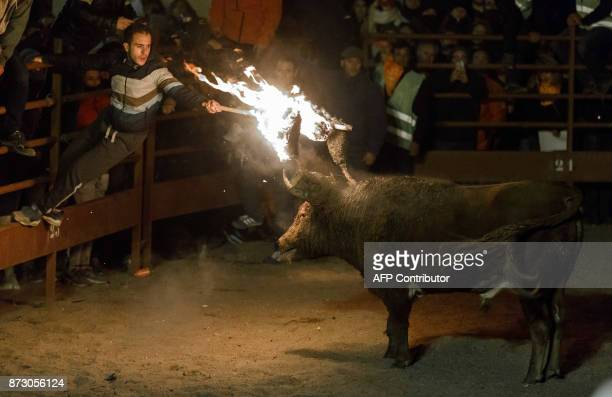 A reveler lights flammable balls attached to a bull's horns during the 'Toro de Jubilo' festival in Medinaceli near Soria Spain on November 11 2017...