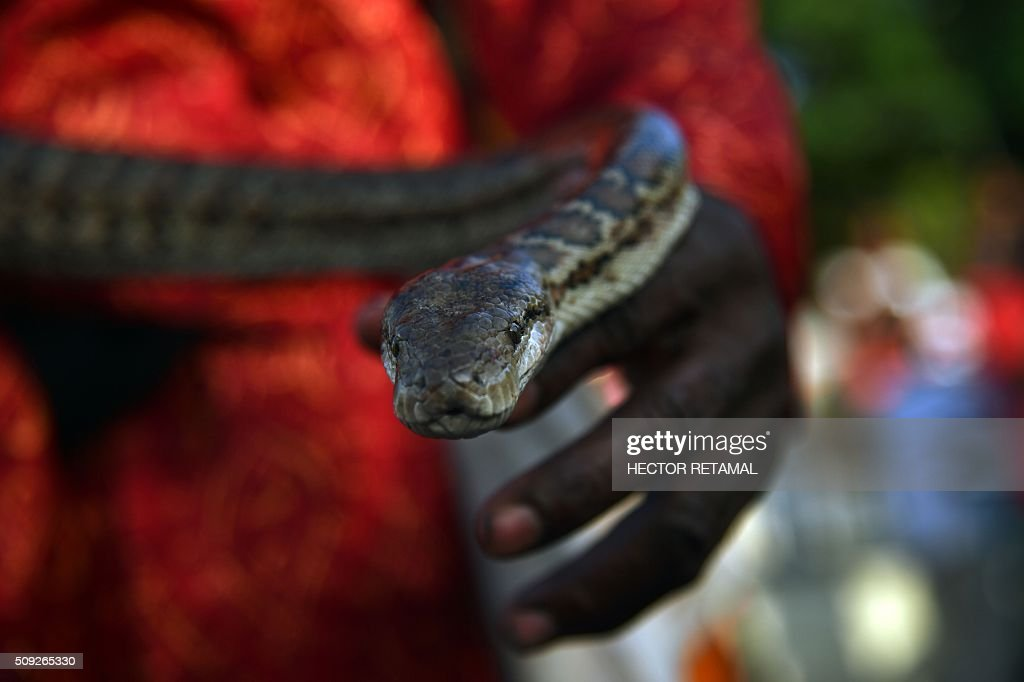 A reveler performs with a snake during the 2016 National Carnival Parade on February 10, 2016 in Port-au-Prince, Haiti. The name in Haitian creole of the carnival for this year is 'Ayiti Toutan' (Haiti Always). The launch of the carnival two days ago was postponed due to the political situation affecting Haiti. / AFP / HECTOR RETAMAL