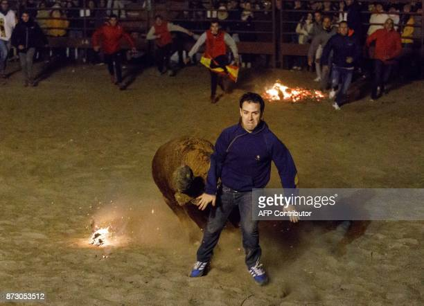 A reveler runs ahead a bull with flammable balls attached to its horns during the 'Toro de Jubilo' festival in Medinaceli near Soria Spain on...