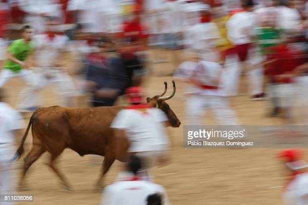 Revellers run around a heifer in the bullring during the fourth day of the San Fermin Running of the Bulls festival on July 9 2017 in Pamplona Spain...