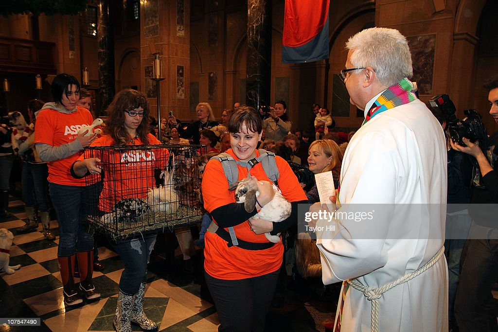 Reverend Stephen Bauman blesses farm animals at the 2010 ASPCA Blessing Of The Animals at Christ Church on December 12, 2010 in New York City.