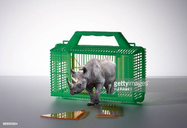 rhino breaking out of the cage