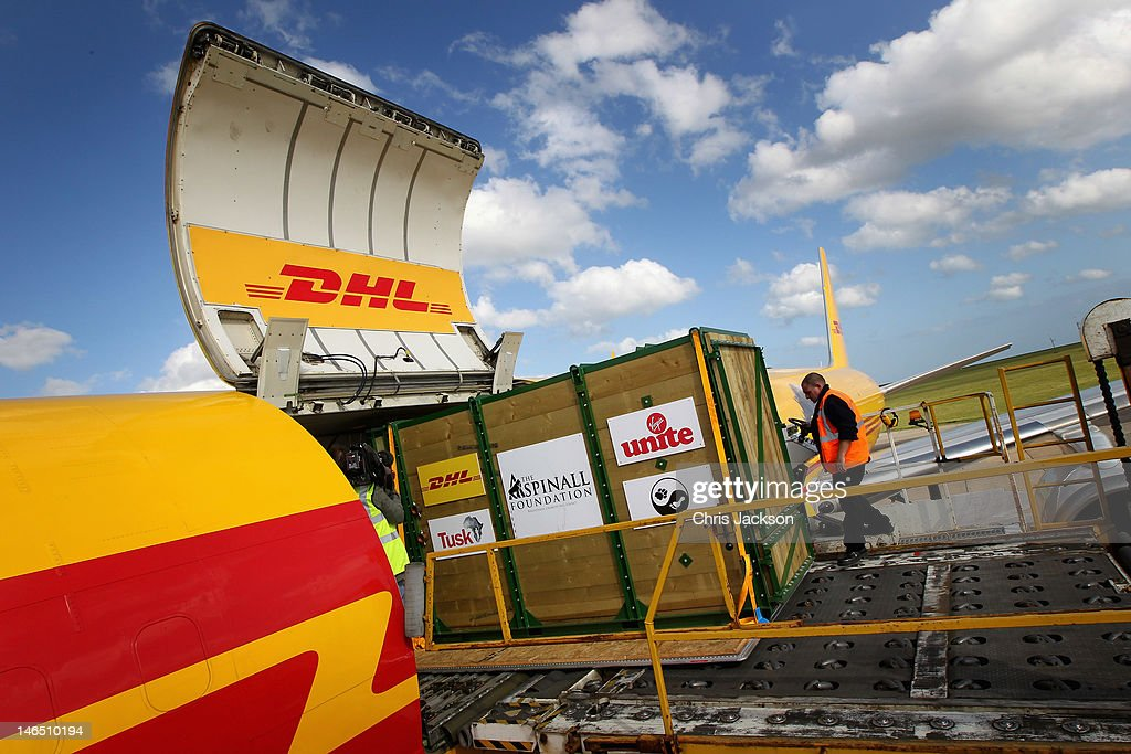 Rhino crates are loaded onto a specially enlisted DHL Boeing 757 ahead of leaving to be translocated to Tanzania at Manston airport on June 16, 2012 in Manston, England. The Aspinall Foundation along with the Tusk Trust and the George Adamson Trust are combining forces to stage a rare translocation of three captive born black rhino to Mkomazi National Park in Tanzania in order to rejuvenate numbers of the black rhino in the area. The three animals, Grumeti, Monduli and Zawadi are being airlifted in a dedicated DHL Boeing 757 from Manston Airport in Kent direct to Kilimanjaro Int Airport in Tanzania. The three black rhino have been donated by Damian Aspinall, Chairman of The Aspinall Foundation, from their breeding group at Port Lympne Wild Animal Park in Kent. The reintroduction of endangered species to the wild to assist breeding programmes is a major focus of The Aspinall Foundation. Prince William, Duke of Cambridge as Patron of Tusk Trust and a dedicated campaigner against poaching visited the rhinos at Port Lympne ahead of their translocation and today released a speech via the BBC highlighting his dedication to the fight against the illegal trade of ivory.