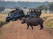 Rhino Crossing the Road in Africa