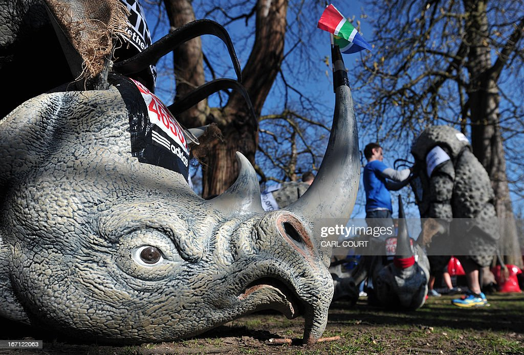 A rhino head, to be used as part of a costume by a charity runner, is pictured in Greenwich Park in southeast London on April 21, 2013 ahead of the 2013 London Marathon.