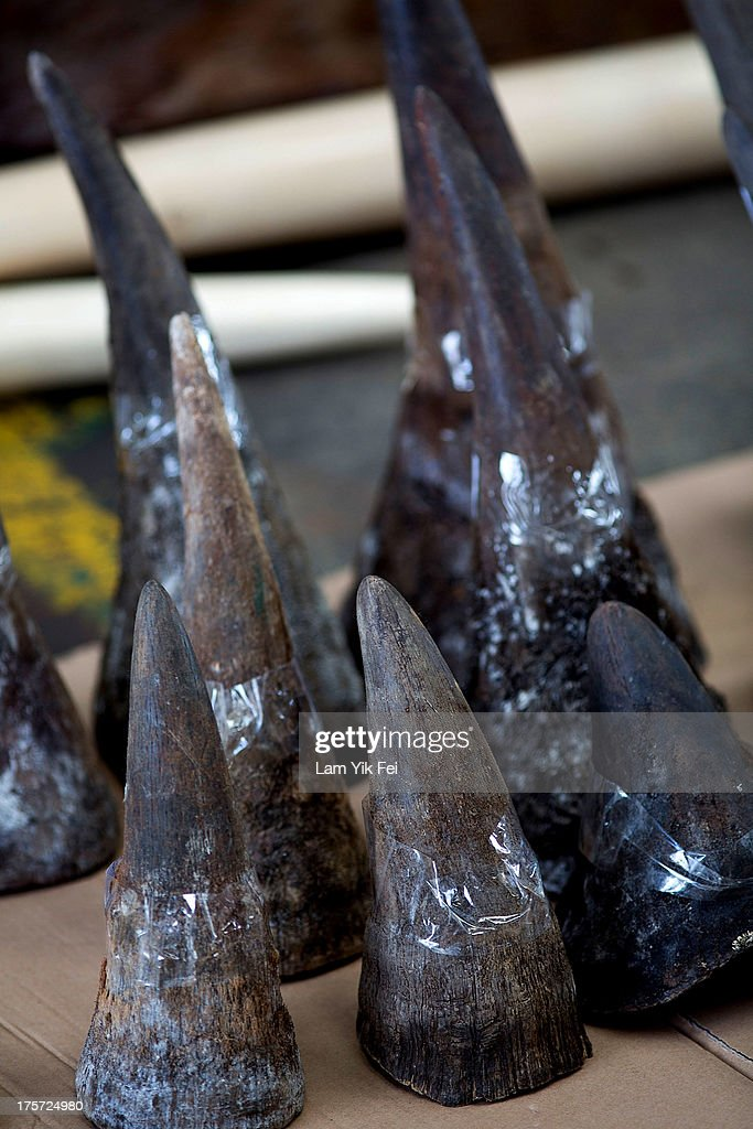 Rhino horns seized by Hong Kong customs officials are displayed during a press conference on August 7 2013 in Hong Kong Customs officials at the Kwai...