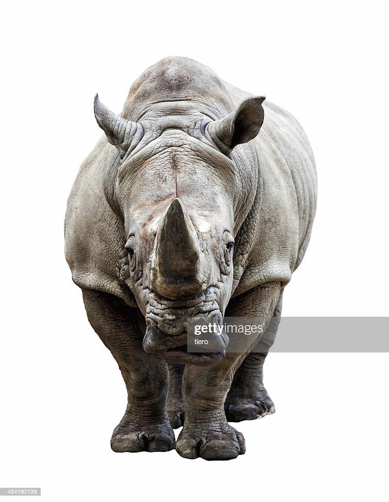 rhino sobre fondo blanco : Foto de stock