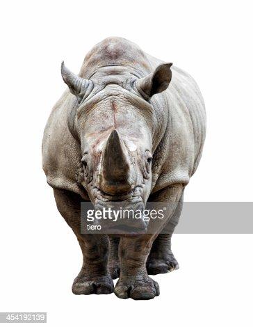 rhino sobre fundo branco : Foto de stock